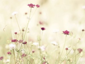 Spring_Blossoms